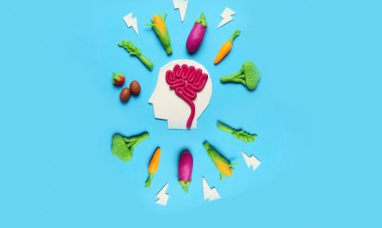 Top 5 Best Memory Pills 2021